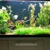aquariumas
